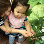 野菜の収穫をしました。