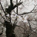 3月29日 さくら山へ散歩(^◇^)!